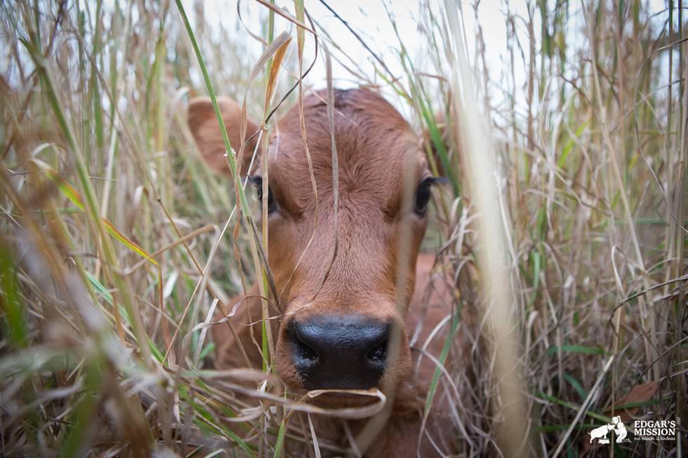 Maman vache 2