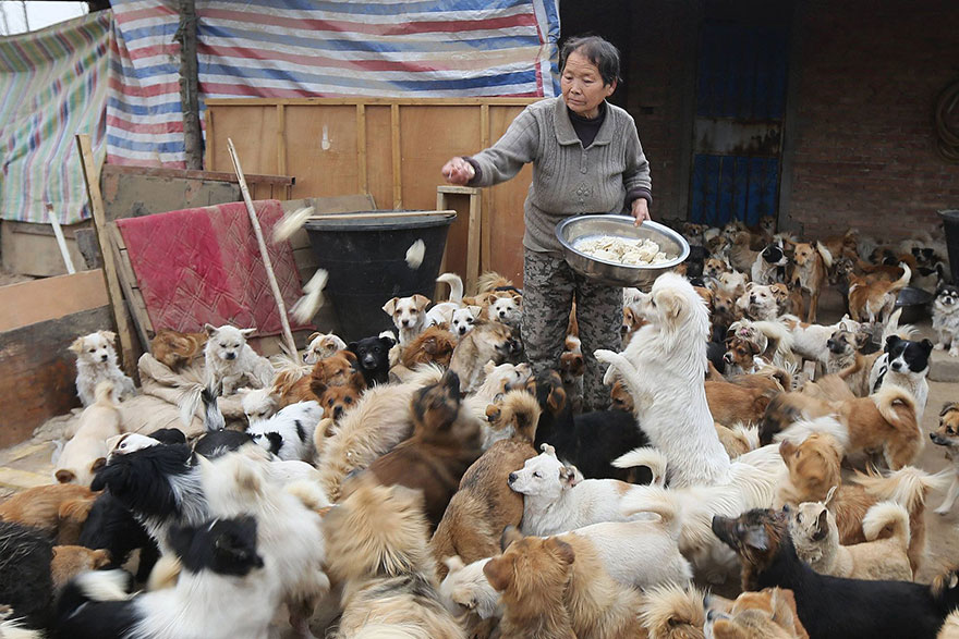 Nourrir chien 1