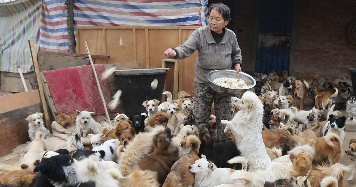 Nourrir chien fb