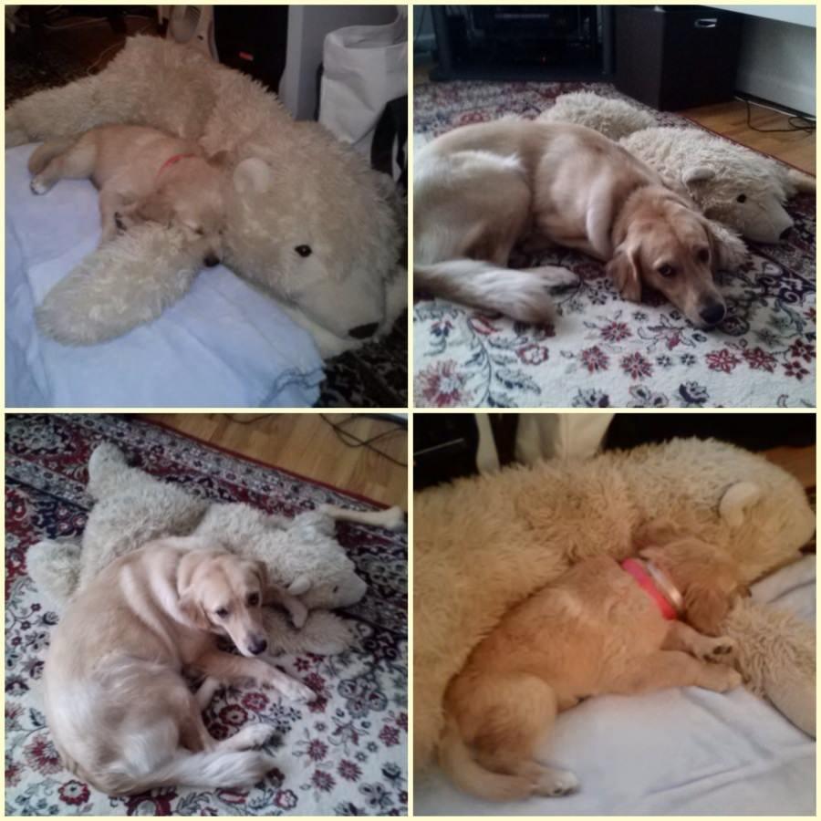 Puppy dog 27