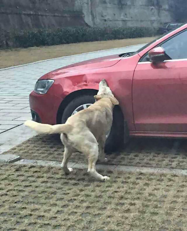Revanche chien 1