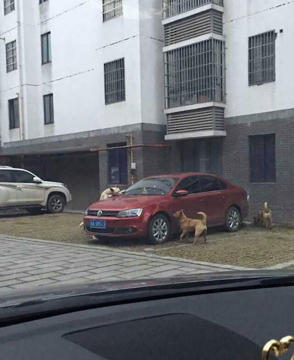 Revanche chien 2