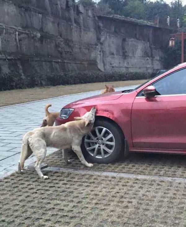 Revanche chien 3