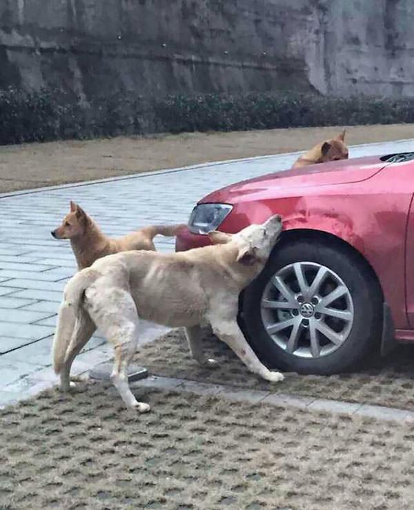 Revanche chien 4