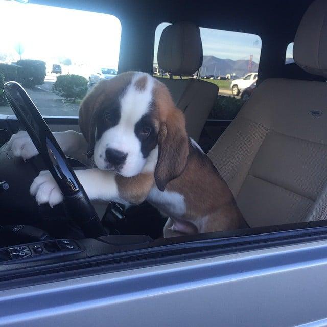 1 puppies