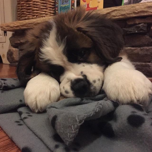 10 puppies