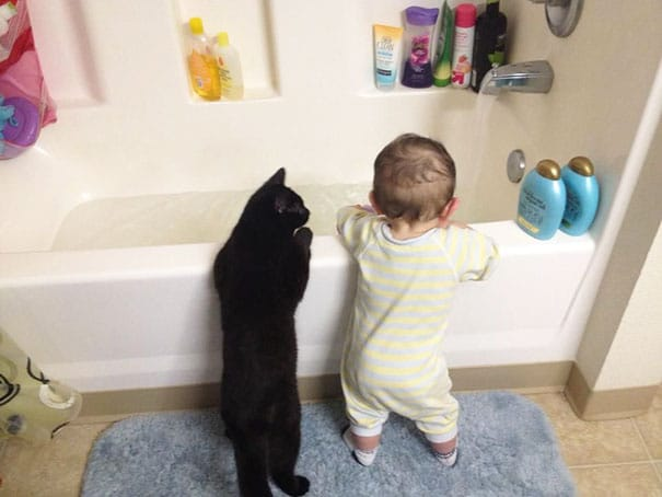 12 kids and cats
