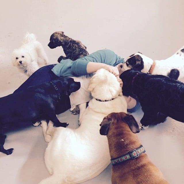 15 crazy dog person
