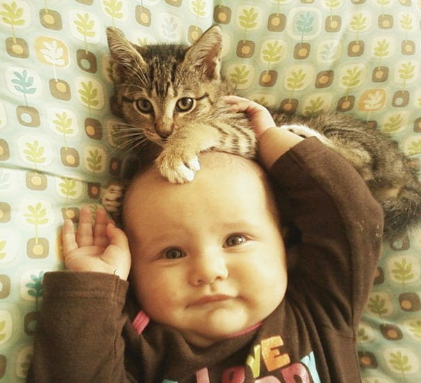 17 kids and cats
