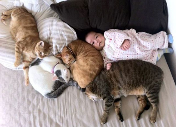 20 kids and cats
