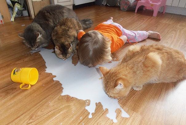 4 kids and cats