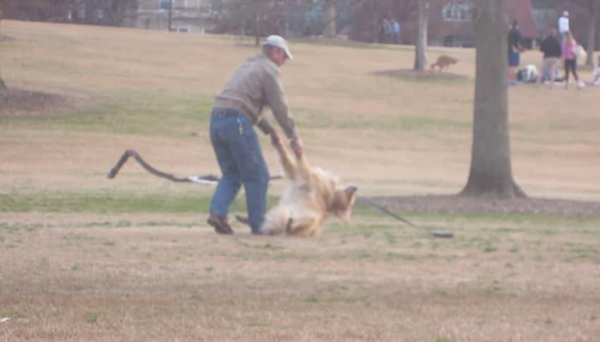 Ce chien paresseux fait tout pour ne pas quitter le parc