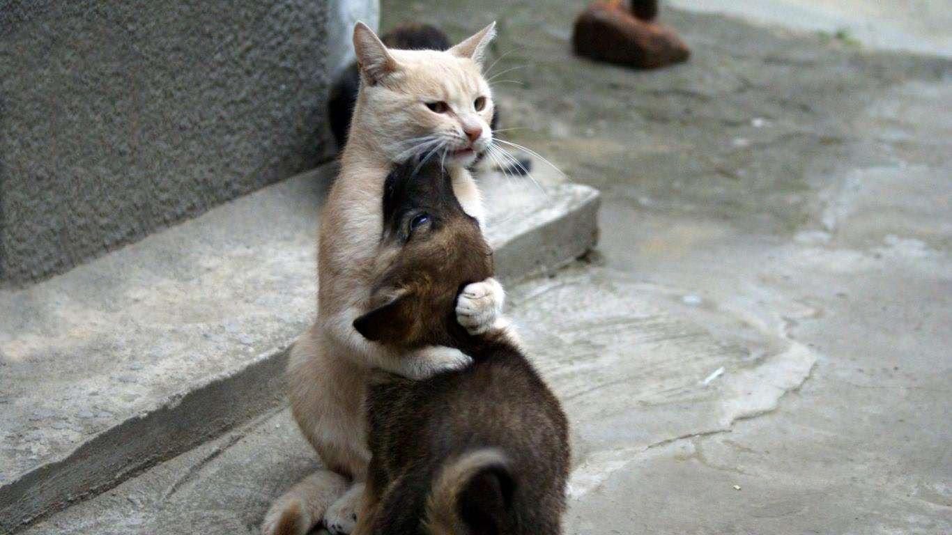Chat au secours du chien