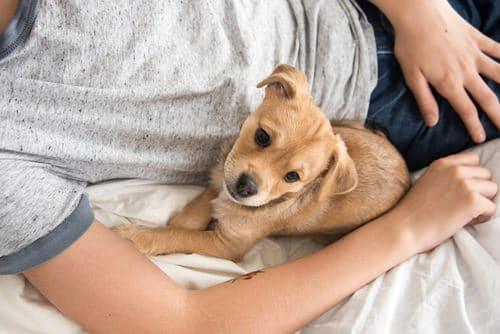 Dormir avec son chien 1