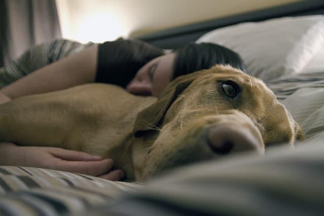 Dormir avec son chien 2