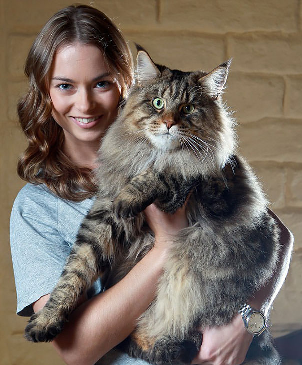 gros chats 11