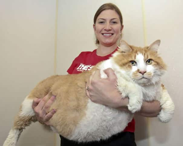 gros chats 13