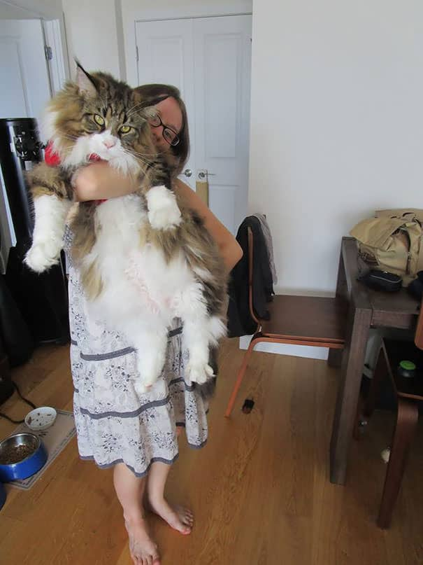 gros chats 17