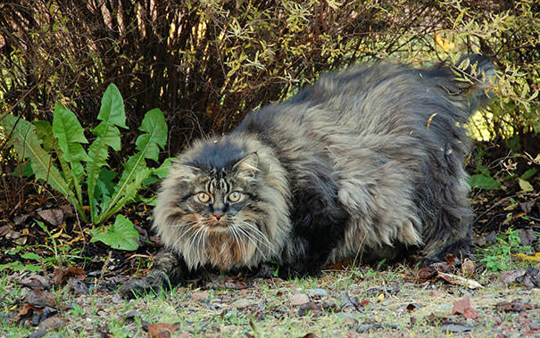 gros chats 19