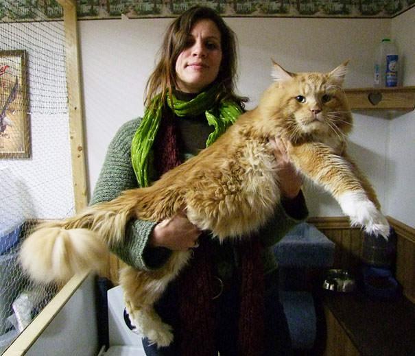 rencontre entre 2 chats adultes Vaulx-en-Velin