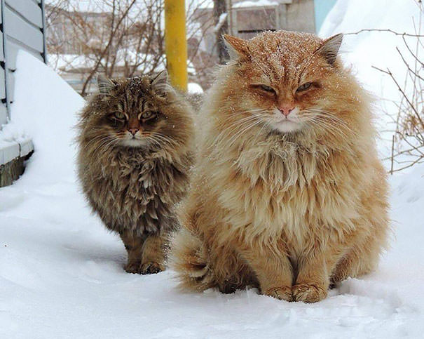 Gros chats 3