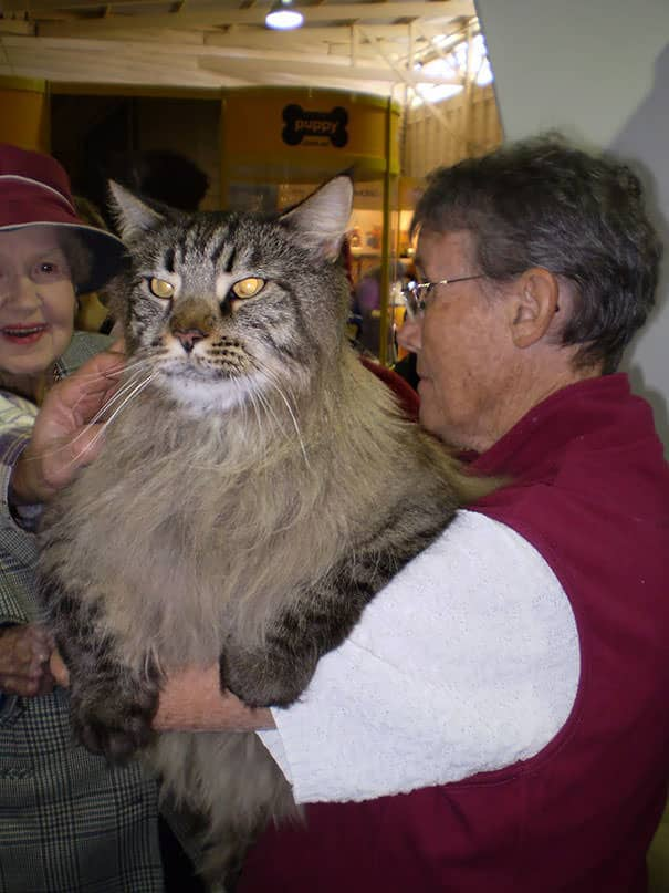 Gros chats 4