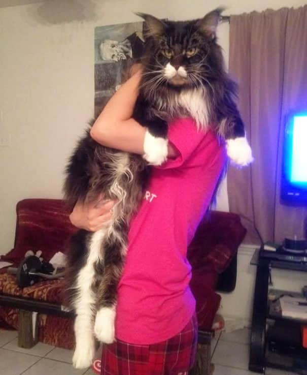 gros chats 6