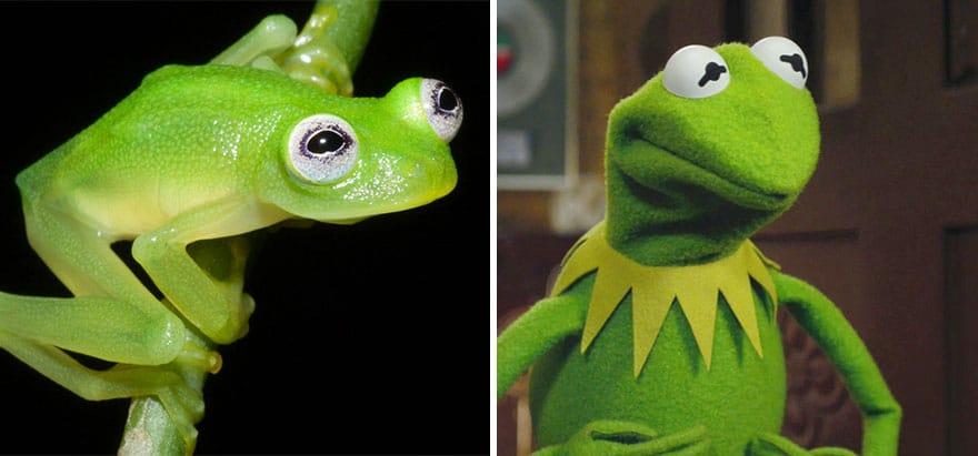 kermit la grenouille 1