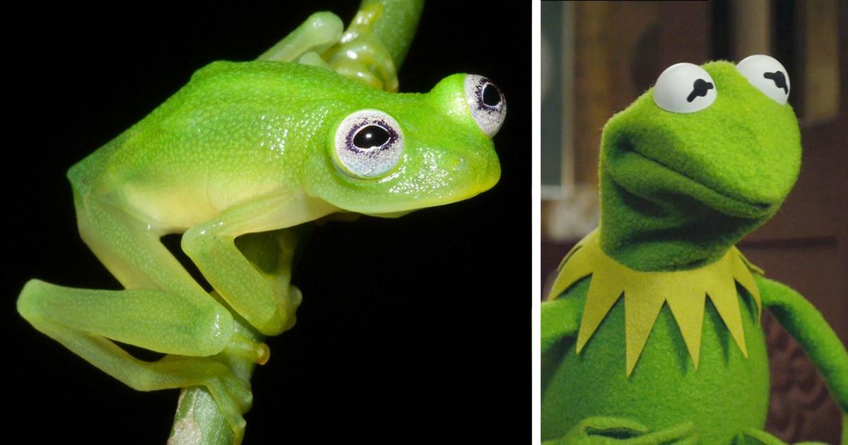 Kermit la grenouille fb