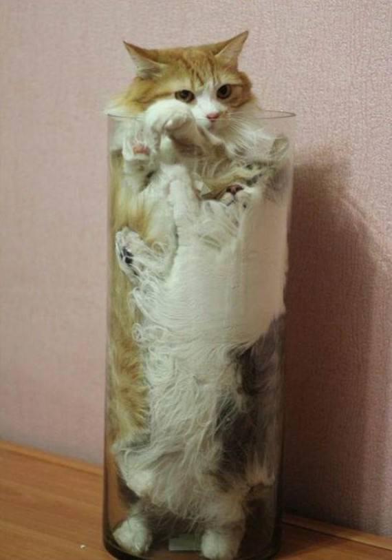 Pets fit 8