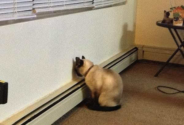 Emmenez votre animal chez le v to tout de suite s 39 il fait - Table qui se replie contre le mur ...