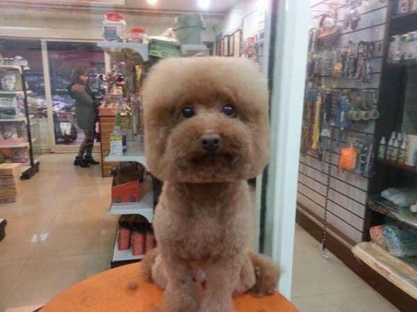 Toilettage chien particulier taiwan 2