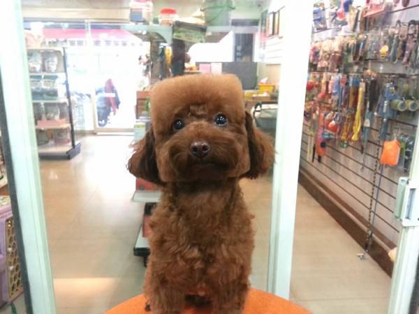 toilettage chien particulier taiwan 4