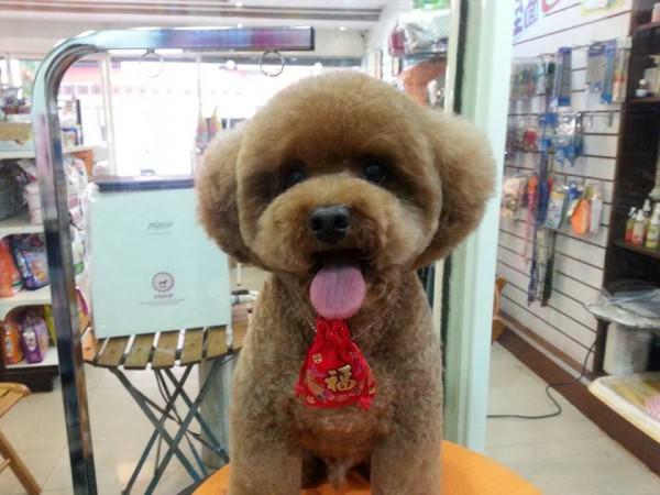 toilettage chien particulier taiwan 6