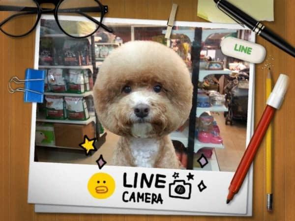 Toilettage chien particulier taiwan 7