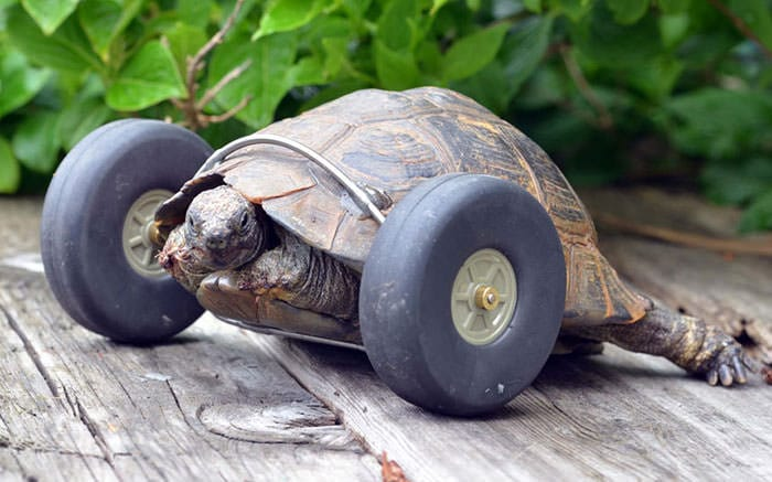 Tortue pattes 1