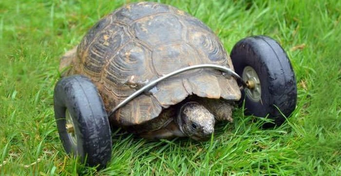 Tortue pattes 3
