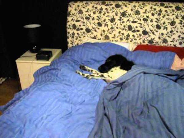 ce chien trouve un moyen de se d barrasser de ce qui l. Black Bedroom Furniture Sets. Home Design Ideas