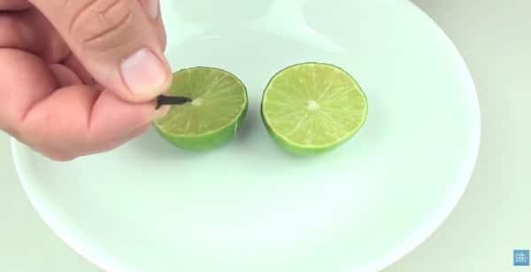 Citron moustique 2