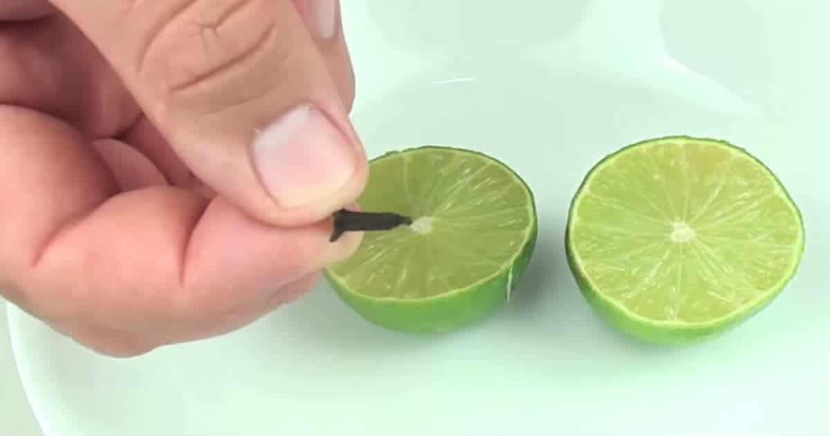 Citron moustique