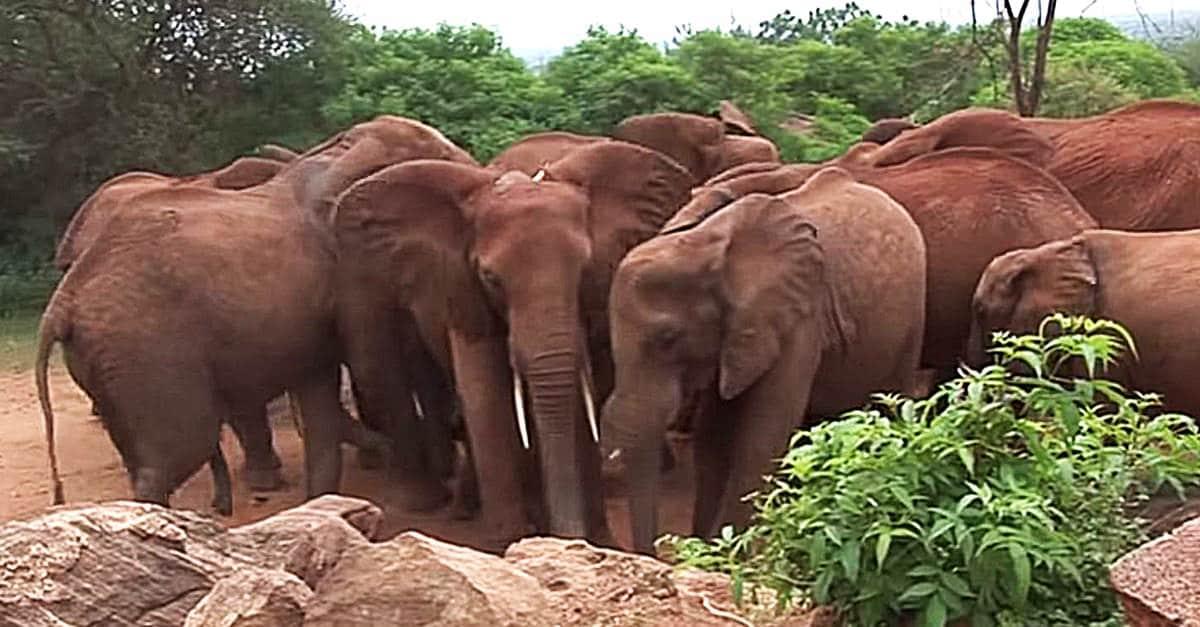Elephantbirth2