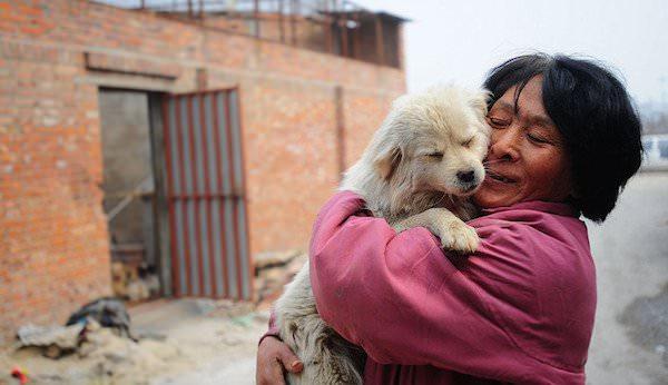 Femme sauve chiens chine fb