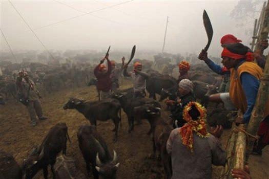 Stop Nepal's Gadhimai festival animal sacrifice
