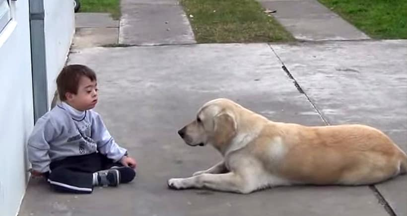 Dog and special child
