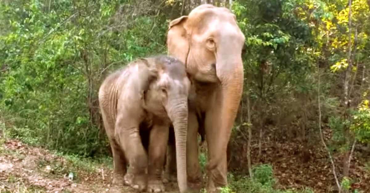 Elephantreunion