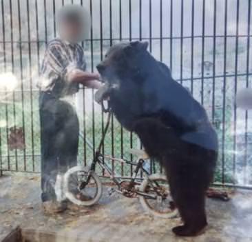 YouTube / PETA