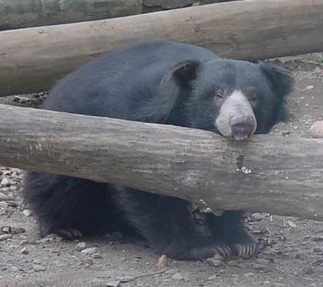 Facebook/Capron Park Zoo