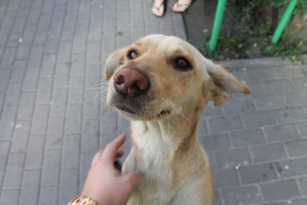 "Right to life"" Help animals. Voronezh"
