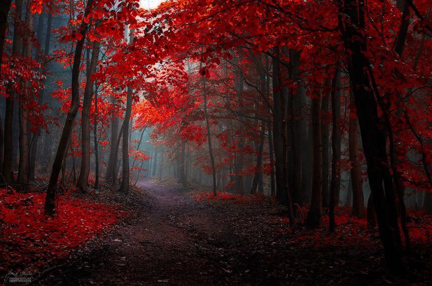 Des forêts d'automne particulièrement oniriques | Nuage
