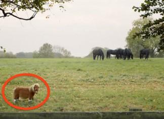 Ignored tiny horse